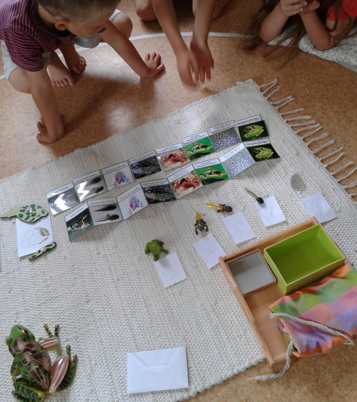 Obojživelníci a znaky jejich skupiny - Kosmická výchova v Montessori pedagogice